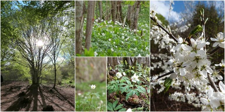 Fleurs_et_arbres