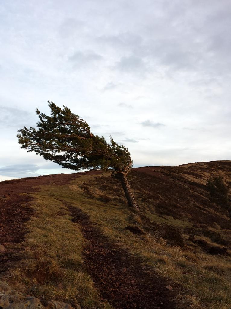Le sens du vent... c'est par là <=