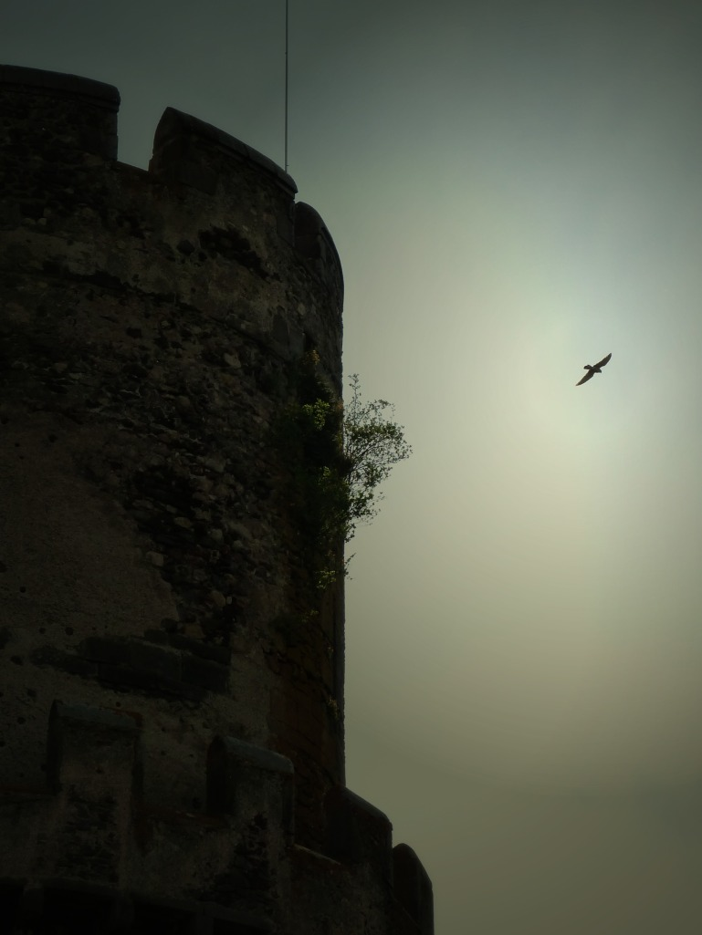 faucon-tournoel