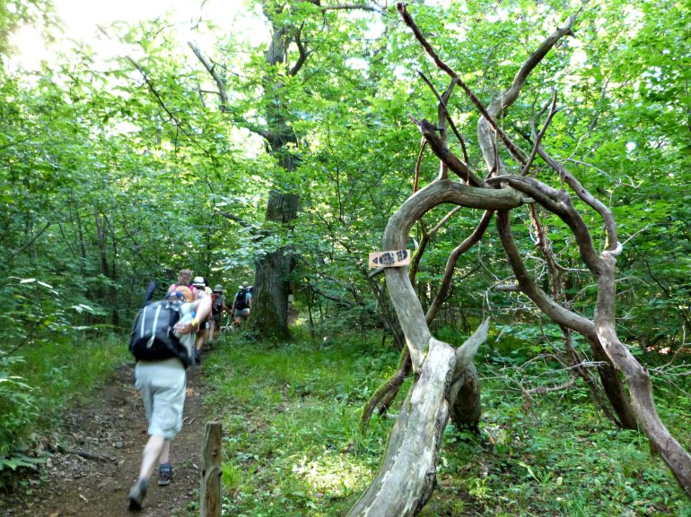 arbre-signalétique