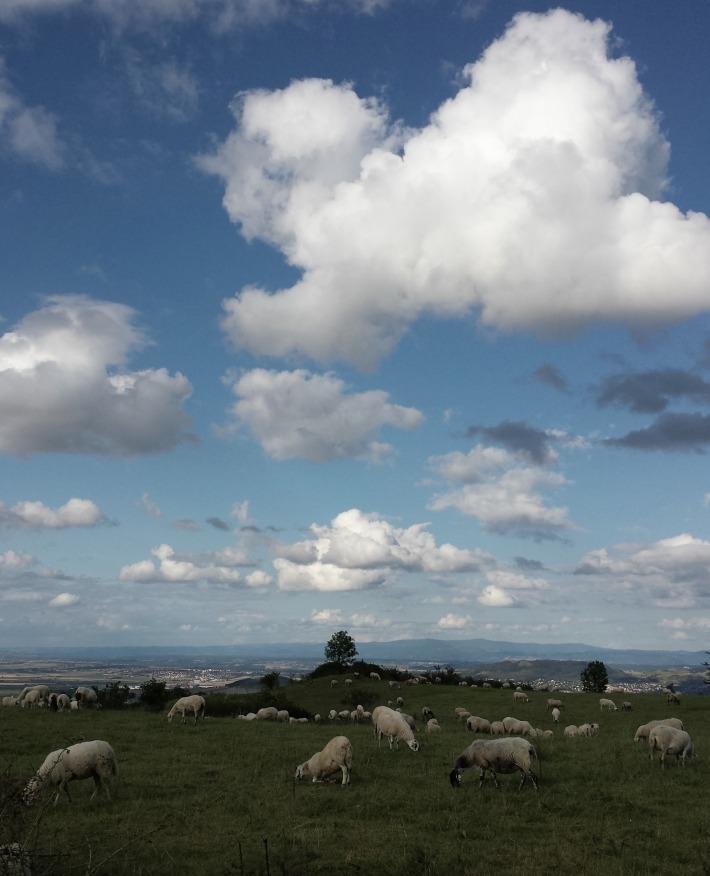 moutons_nuages