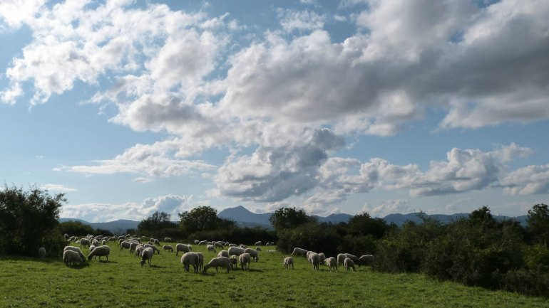moutons_pdd