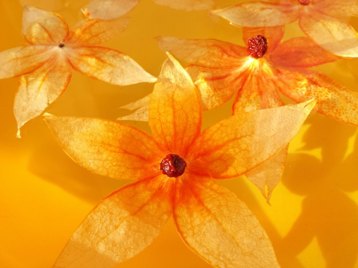 orange_lumière