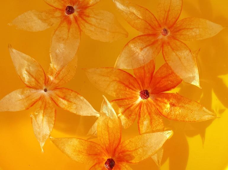 orange_lumière_2