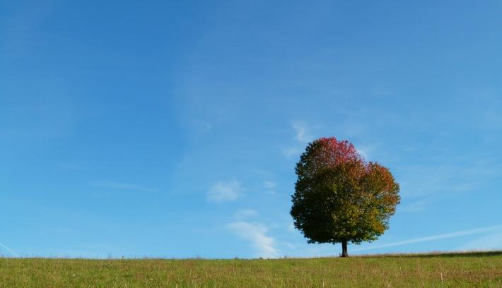 arbre_solitaire_chouvigny