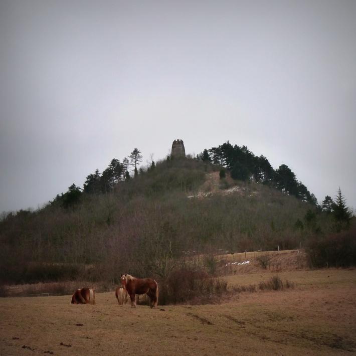 chevaux_montrognon