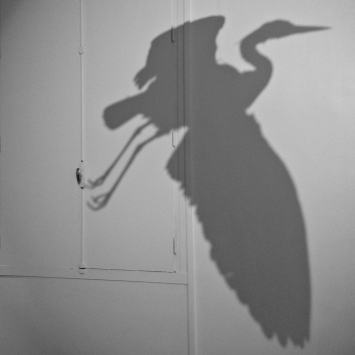 ombre_oiseau