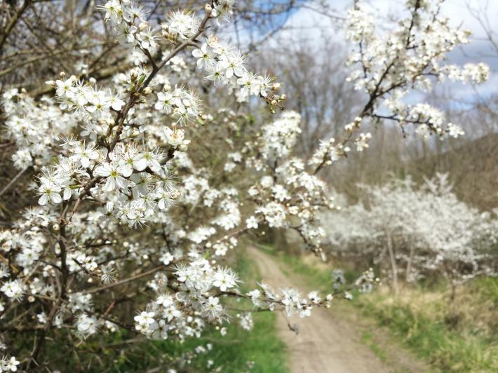 chemin_fleurs