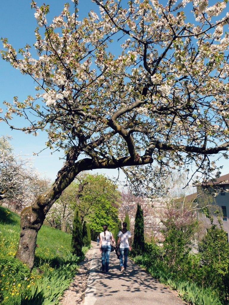 jardins_fourviere