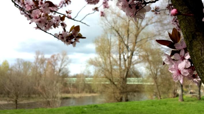 pont_dallet_fleurs