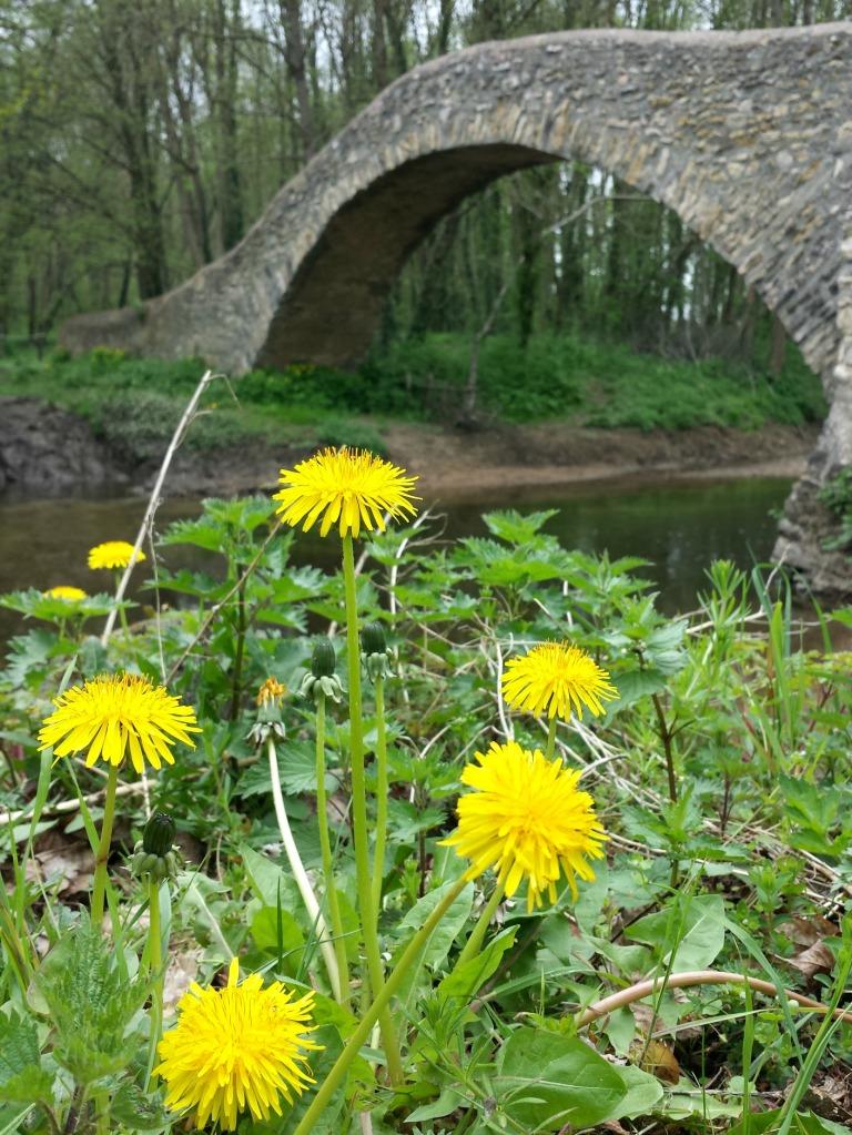 pont_fleurs