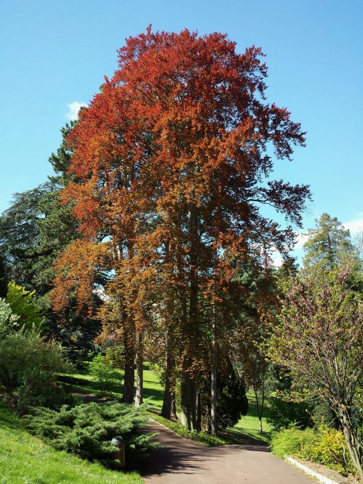 arbre_bargoin