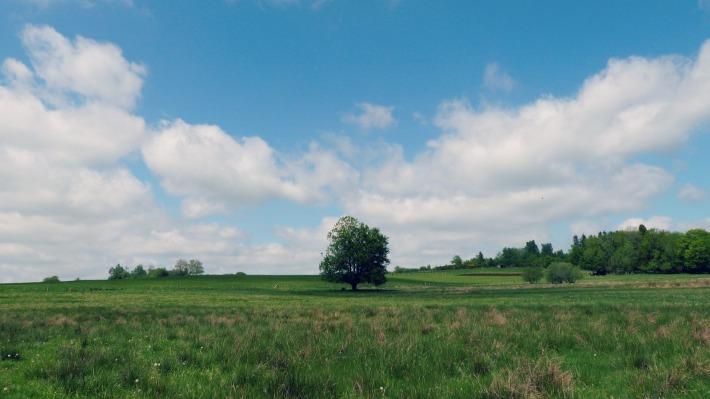 arbre_pulverieres