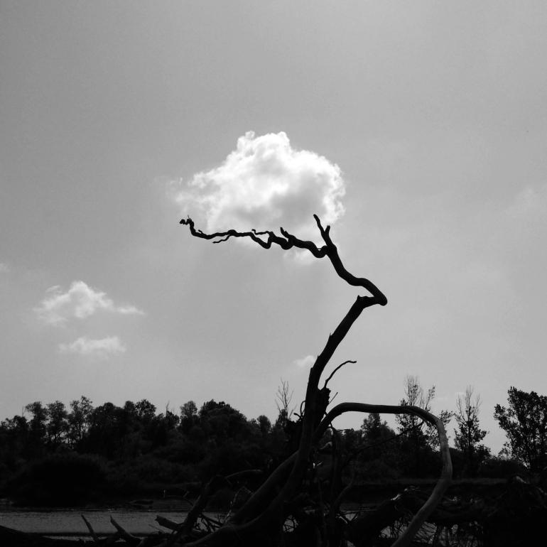 nuage_coton