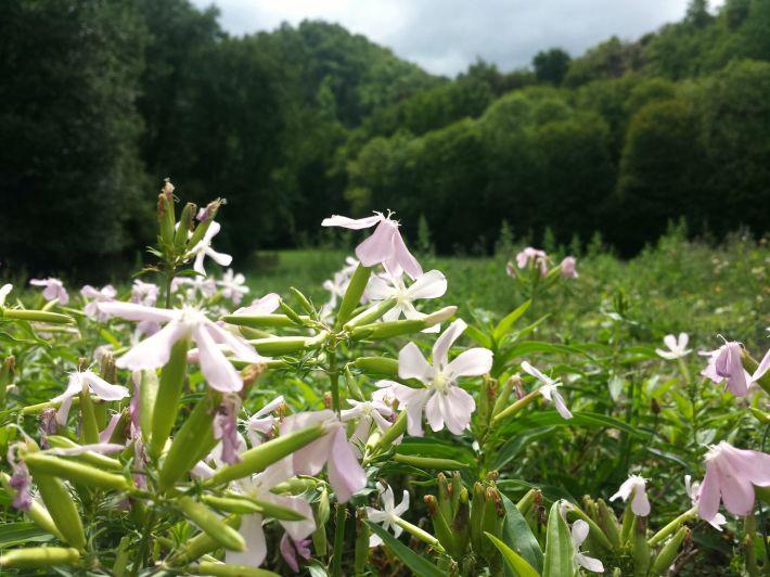 fleurs_monne