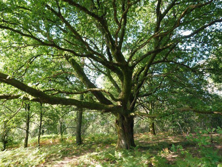arbre_cabane