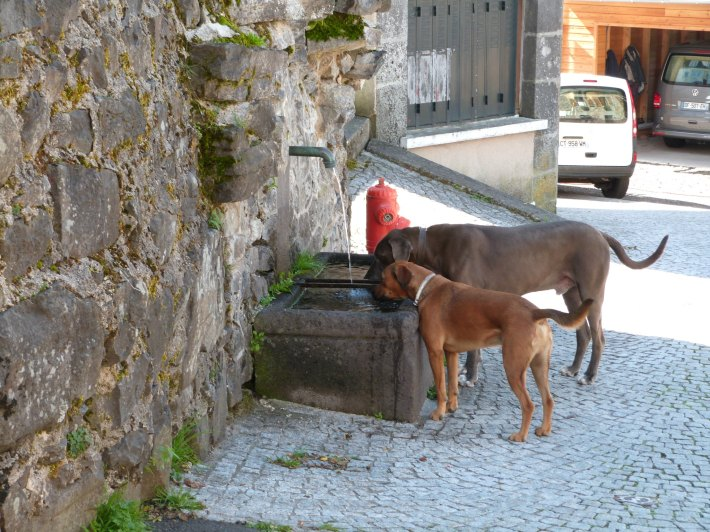 chiens_fontaine