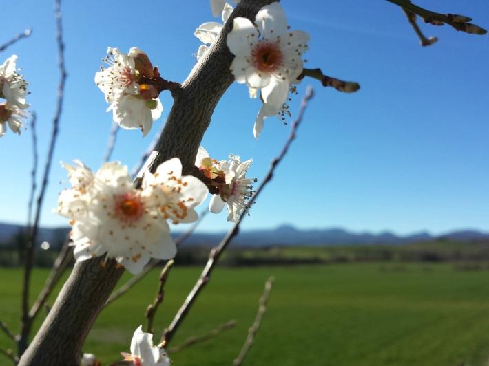 printemps_riom