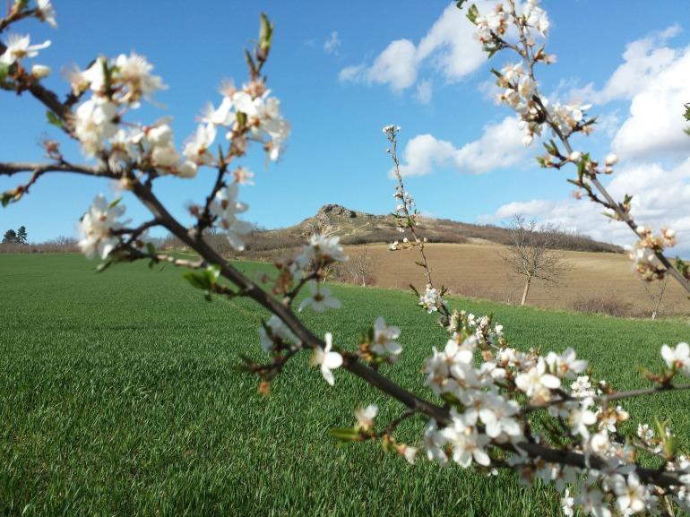 bane_printemps