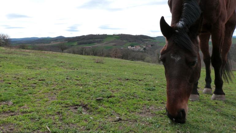 cheval_orbeil