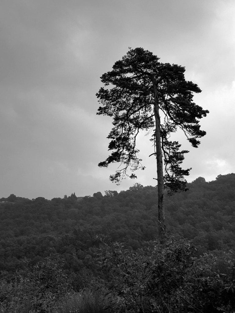 arbre_madet