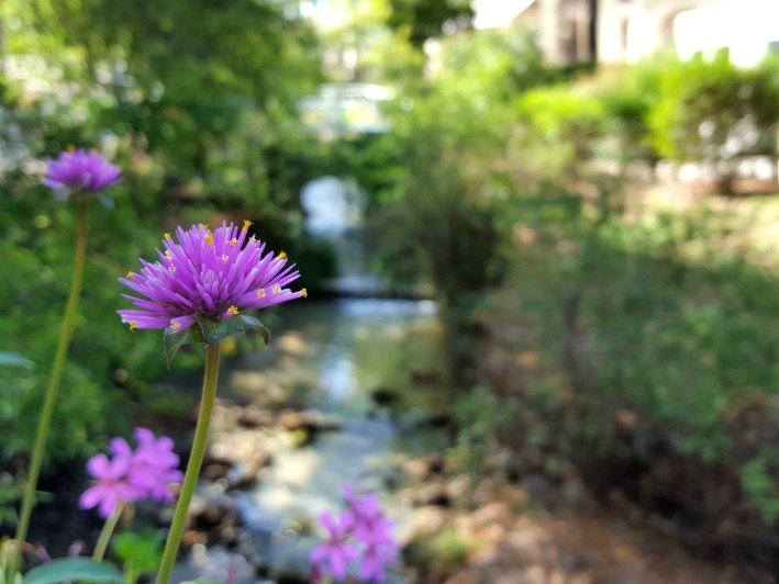 fleur_chatel