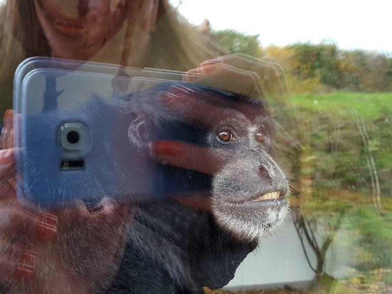 zoo_ardes3