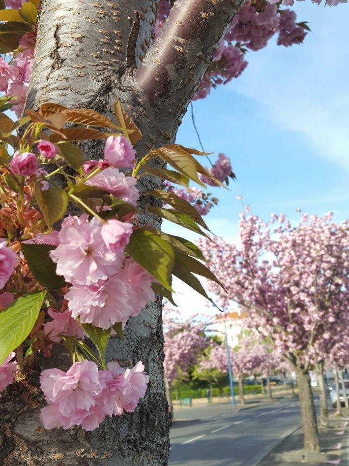 printemps10
