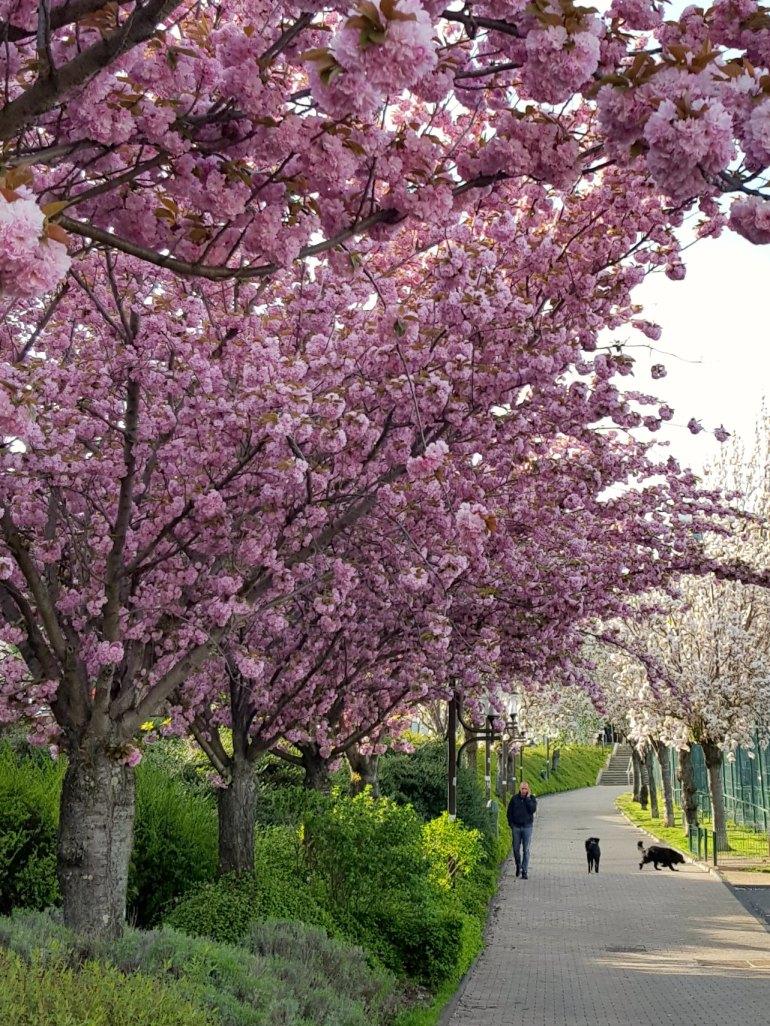 printemps11