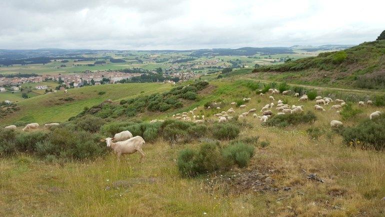 moutons_noisettes