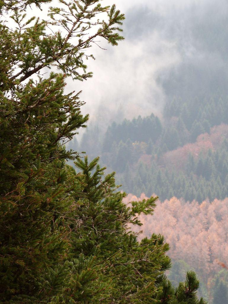 brouillard13
